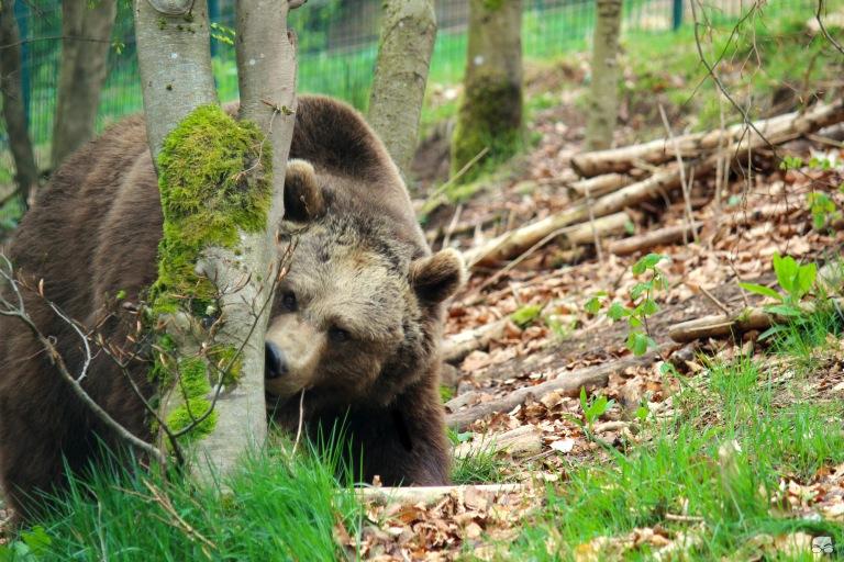 bear sniff